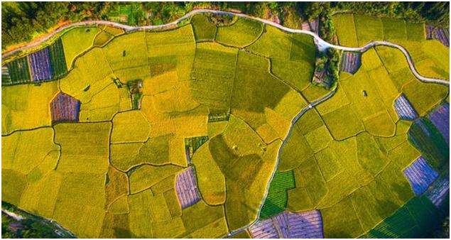农业保险应用解决方案
